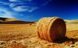 the-palouse-fields-t1